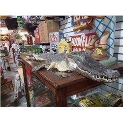 TAXIDERMY CROCODILE