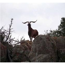 Discounted Hunt Exotics In Colorados Mountains, while in Colorado see Elk the Colorado Sites