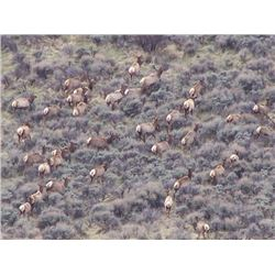 Discounted Great Horseback Cow Elk Hunt in Wyoming, 4000 elk in the area is not uncommon