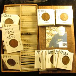 """6 1/4"""" Double Row Stock box full of Cents dating 1937-38 in 1 1/2"""" x 1 1/2"""" holders."""