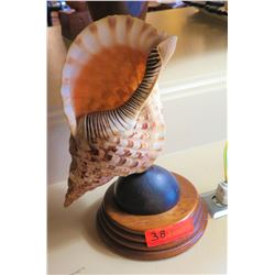 Natural Shell on Wooden Base (was made into lamp)