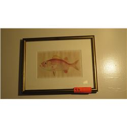 "Framed Fish Print 12"" x 15"""