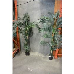 TWO SILK TREES