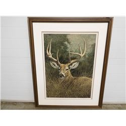 WHITE TAILED DEER PRINT ORIGINAL