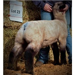 Chico State Sheep Unit