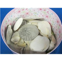 Large container of sand dollars and shells