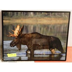 LARGE FRAMED PRINT OF MOOSE