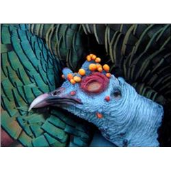7-day Mexican Jungle Ocellated Turkey Hunt for One Hunter and One Observer