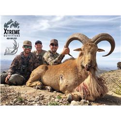 3-day Texas Aoudad Hunt for One Hunter