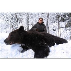4-Day Croatia Brown Bear Mountain Hunt for 1 Hunter and 1 Observer