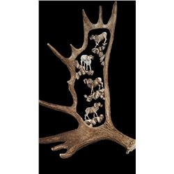 Custom Moose Horn Antler Engraved with Bighorn Sheep motif