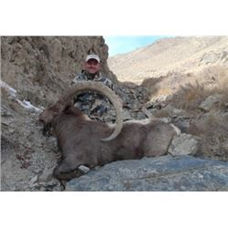 Mid-Asian Ibex in Kyrgyzstan  or Tajikistan.     Asian Mountain Outfitters