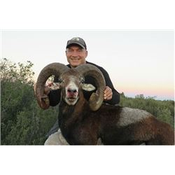 Iberian Mouflon Sheep Hunt in Spain                Eurohunts Spain