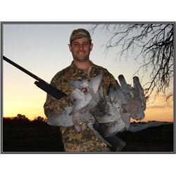 Argentina Dove Hunt                    Wing Shooters Unlimited