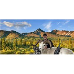 Alaska Dall Sheep Hunt for 1 Hunter                   Dillinger River Outfitters