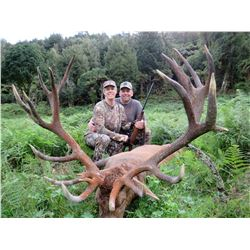 Red Stag Hunt for 1 in New Zeeland