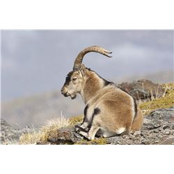 6 Day (3 days per hunter) Ibex hunt for 2 Hunters with Spain Hunting Ibex – Includes 2 Ibex