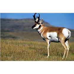 3 Day New Mexico Pronghorn Antelope Hunt on Vermejo Park Ranch