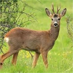 4 Day Roe Deer Hunt with Hunt Trip Spain for 1 Hunter & 1 Non-Hunter Included is 3 days of sightseei