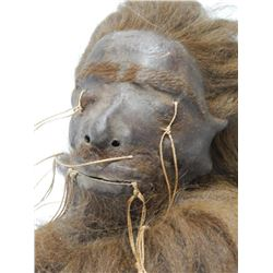 Museum quality looks real shrunken head tsantsa jivaro taxidermy