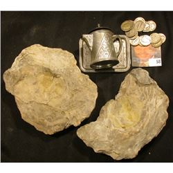 What appears to be a pair of Petrified Oyster Shells, were they used by the Native Americans???  I d