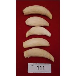LOT OF 5 WHALES TEETH