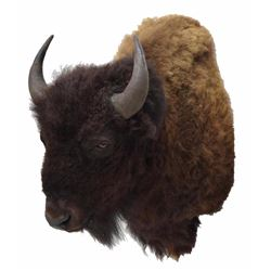 American Bison/buffalo Taxidermy Shoulder Mount