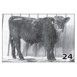 Lot - 24 (High Performer)
