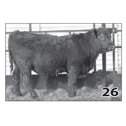 Lot - 26 (High Performer)