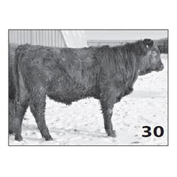 Lot - 30 (High Performer)