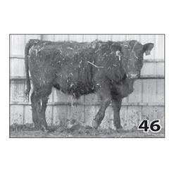 Lot - 46 (High Performer)