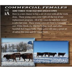 100 THREE YEAR OLD RED ANGUS COWS