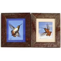 2 Framed Hummingbird Photographs by Wachholz