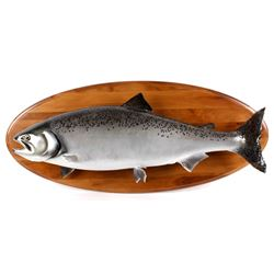 Large Chinook King Salmon Trophy Mount