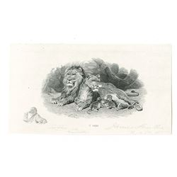 James Smillie Proof Engraving of Lion at Home with small Self Portrait of Smillie With His Autograph