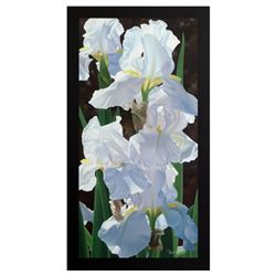 Enchanting Irises by Davis, Brian
