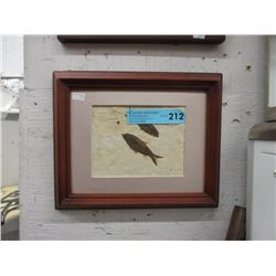 Framed Green River Formation Fossil
