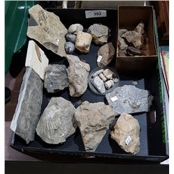 BOX OF MISC FOSSILS