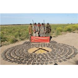 4 day high volume dove hunting for 4 hunters in Cordoba, Argentina