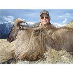 5-Day New Zealand Himalayan Bull Tahr hunt for 1 hunter & 1 observer