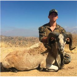 Youth Hunt for Exotic Goat-Sheep with Taxidermy Head Mount and Savage .243 Firearm