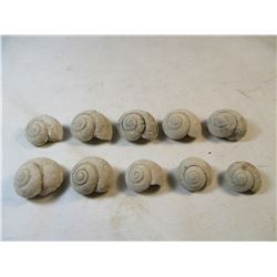 Lot of 10 South Dakota Snail Vivaparus sp. Fossils