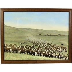 Large hand tinted image of a Montana cattle herd