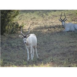 3 DAY TEXAS EXOTIC TROPHY HUNT FOR 2