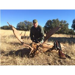 5-Day Hunt in Spain for animals of your choice