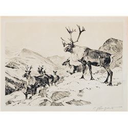 Carl Rungius -Mountain Caribou