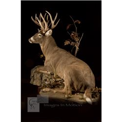 Taxidermy & Trophy Room Certificates