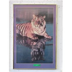 Framed Tiger Poster