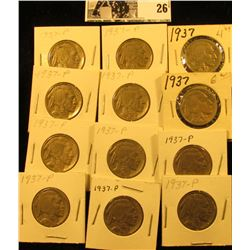 (12) 1937 P Buffalo Nickels all carded in 1 1/2  holders. Some slightly better grades.