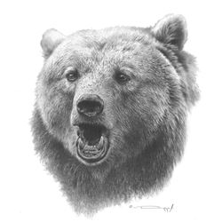 Grizzly Bear – Original Pencil Drawing by Dennis Mayer Jr. Valued at $600.00